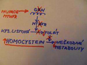 schéma kyselina listová