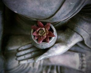 Budha skvětinou jako dar