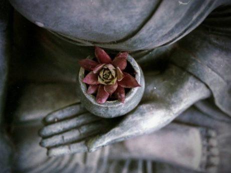 Budha s květinou jako dar