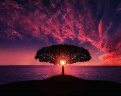 Strom plodnosti