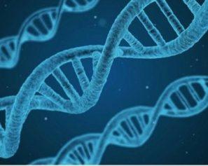 DNA agenetické vyšetření